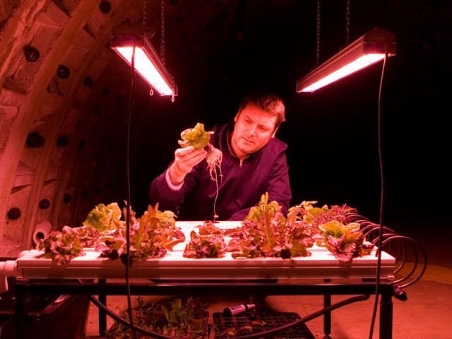 Grönsaksodlingar i tunnelbanan. 33 meter under gatorna i Clapham, London, odlas grönsaker och salladsblad i t-banegångarna. Med den senaste LED-tekniken, kan grödorna odlas året runt i dessa bortglömda tunnlar med ett gynnsamt odlingsklimat.