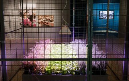 33 meter under de livliga gatorna i Clapham, London, odlas det för fullt grönsaker och salladsblad i t-banegångarna. Med den senaste LED-tekniken, kan grödorna odlas året runt i dessa bortglömda tunnlar med ett gynnsamt odlingsklimat. Projektet visades i utställningen Reprogramming the City. Foto: Matti Östling / ArkDes